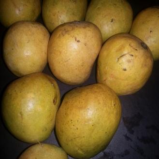 One of famous varieties of mangoes of Goa -Mankurad